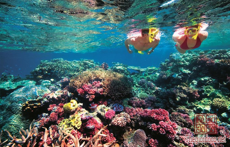 Rặng-San-Hô-Great-Barrier-Reef.jpg